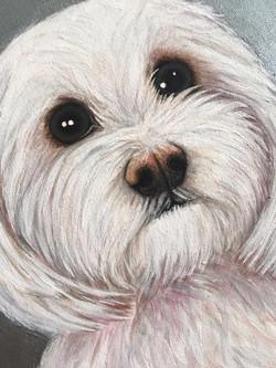 Jimmy Dog Pet Portrait Natalie Daghestani Art Dubai Artist4