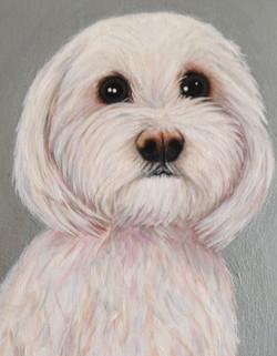 Jimmy Dog Pet Portrait Natalie Daghestani Art Dubai Artist2