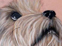 Luna Pet Portraits Natalie Daghestani Art Dubai Artist Dogs5