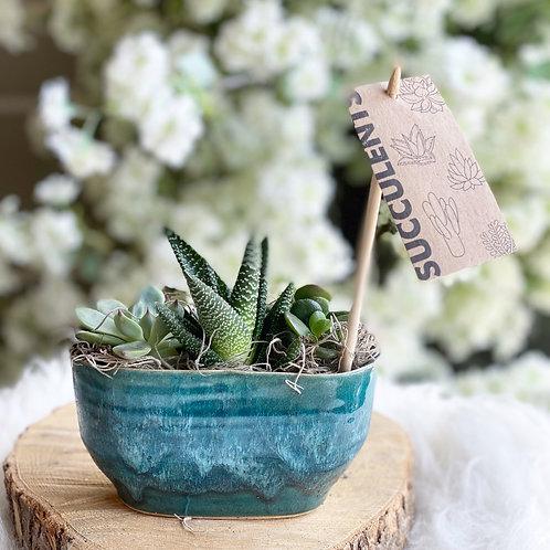 Mini Succulents in Blue pot