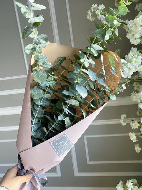 True Blue Eucalyptus