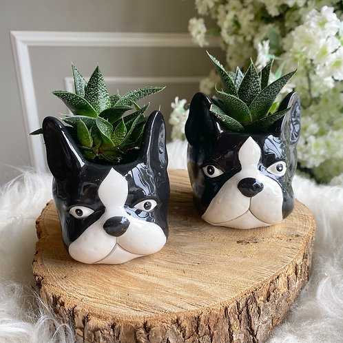 Boston Terrier (Small or Large)- Each