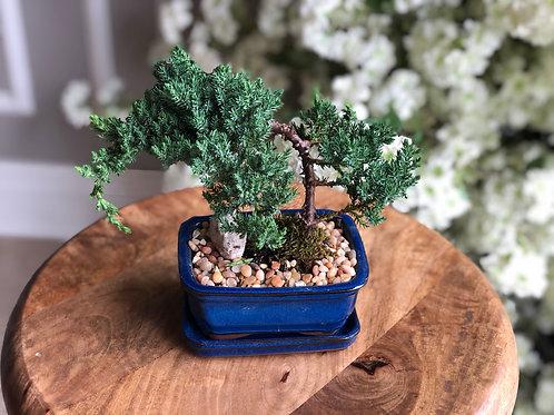Bonsai Tree (Small)