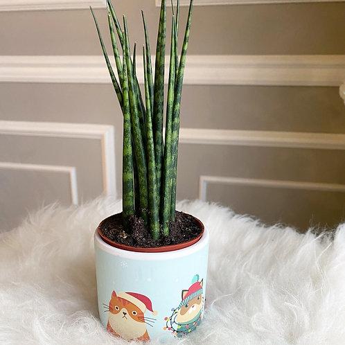 Sanseveria in Winter Cat pot