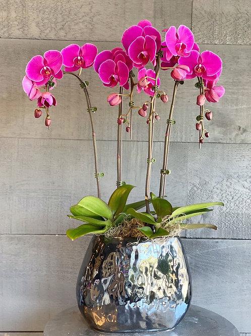 Purple Orchids (4stems)