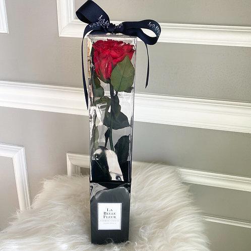 Preserved Single Long Stem Rose