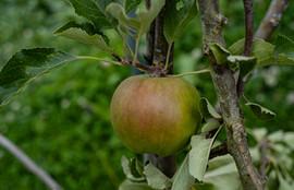 La Pommeraie... des pommes !