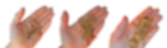handspng.png