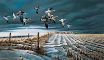THE SNOW GEESE ARE FLYING...