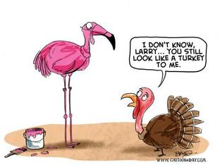 IT'S TIME TO TALK TURKEY PILGRIM...