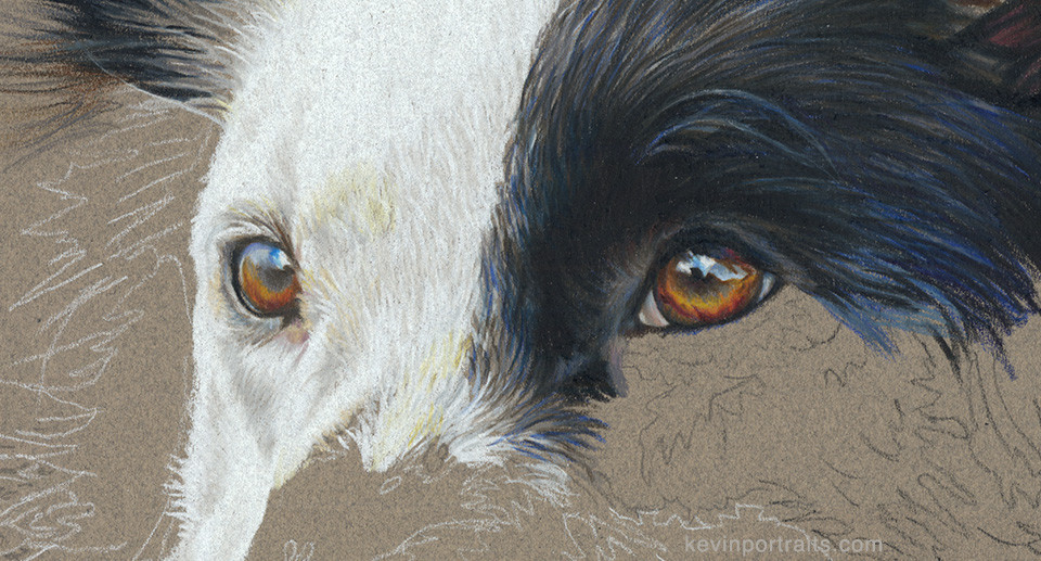 Detail of Border Collie eyes in colored pencil portrait, in progress
