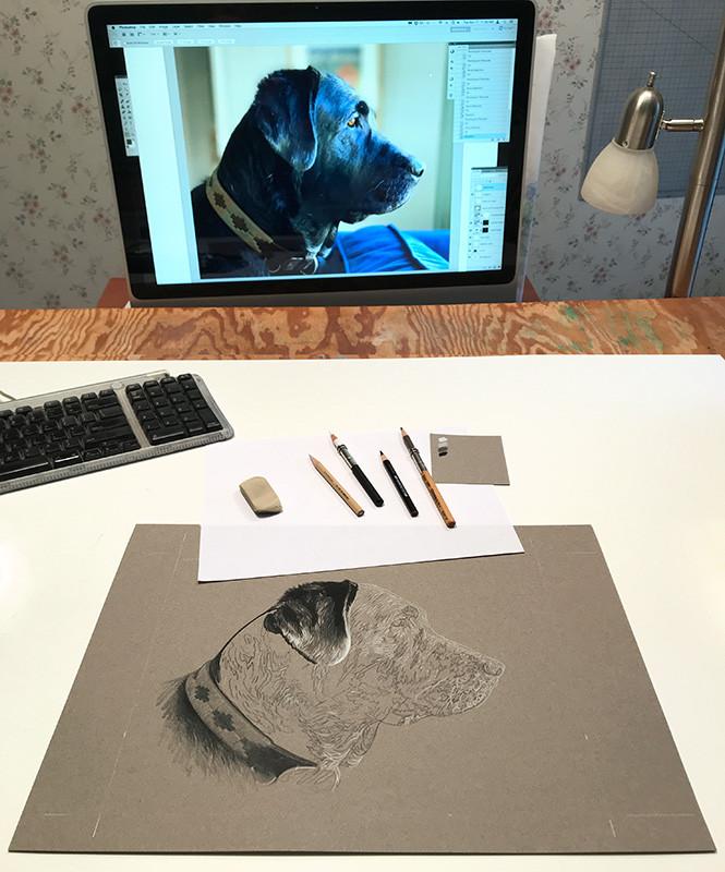 Pencil drawaing portrait of black Lab in progress in the art studio