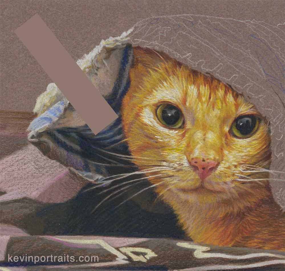 Colored pencil portrait of orange cat under a blanket, color comparison