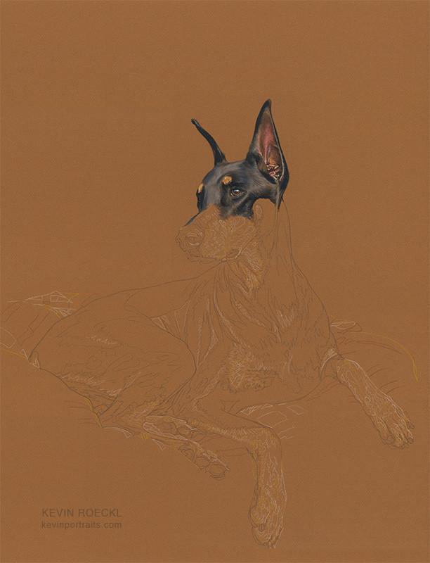 Colored pencil portrait of black Doberman on golden-brown Canson paper, in progress