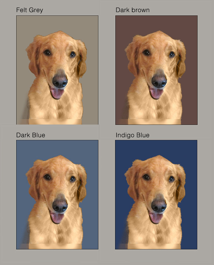 Four layouts for a Head Study portrait of  Golden Retriever Service Dog