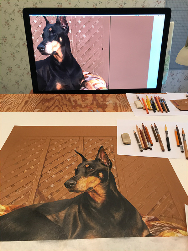Colored pencil portrait of a black Doberman in progress in Kevin's art studio with a reference photo on the monitor