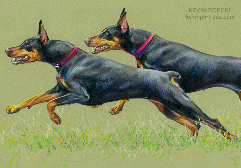 Detail of a portrait of two black Dobermans running on grass, in colored pencil, by artist Kevin Roeckl