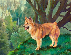Fine Art portrait of dog in a forest scene with waterfall