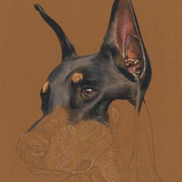 Louie portrait in progress 1