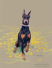 Fine Art portrait of a purebred black Doberman dog