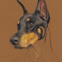 Louie portrait in progress 2