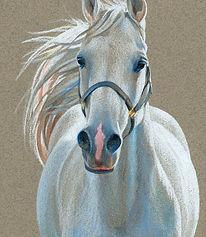 Fine art portrait of horse