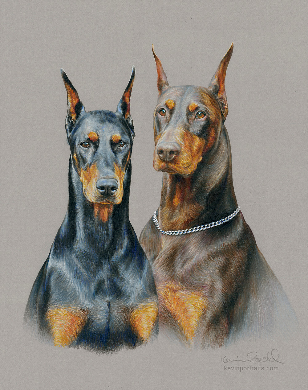 Fine art head-study portrait of a red Doberman and a black Doberman, done with colored pencil on Canson paper by artist Kevin Roeckl