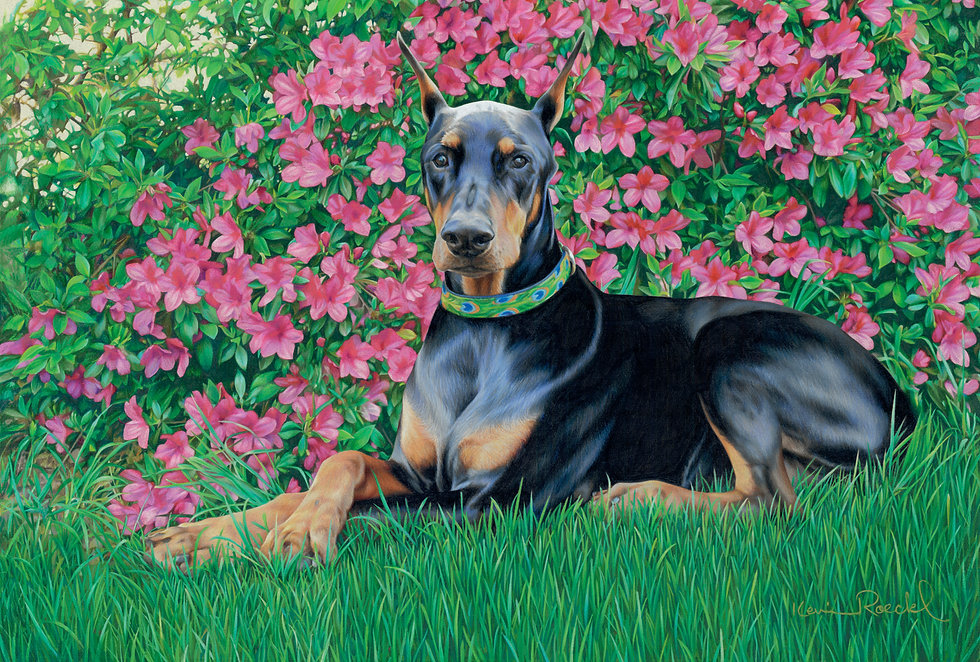 Roeckl portrait of a black and tan Doberman in a garden with pink azaleas behind him.