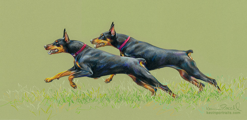 """""""Little Jewel"""" portrait of two black Dobermans running on grass, in colored pencil, by artist Kevin Roeckl"""