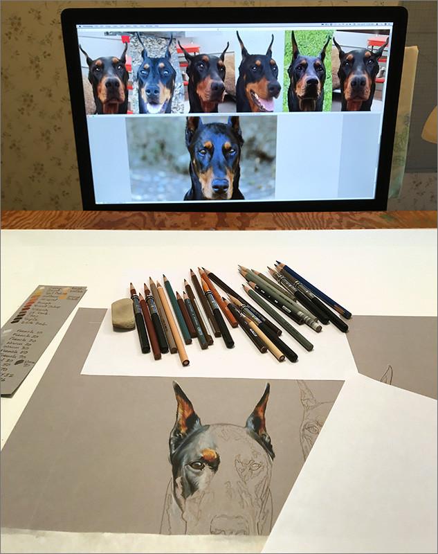 Colored pencil portrait of black Doberman, in progress in Kevin's art studio