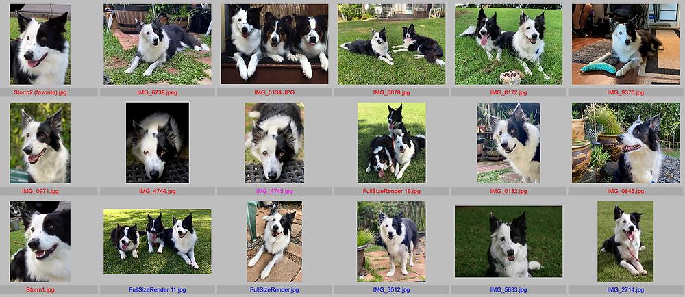 screenshot of client's photos