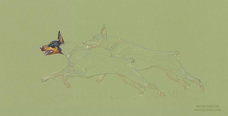 Prismacolor pencil portrait of two Dobermans running, in progress