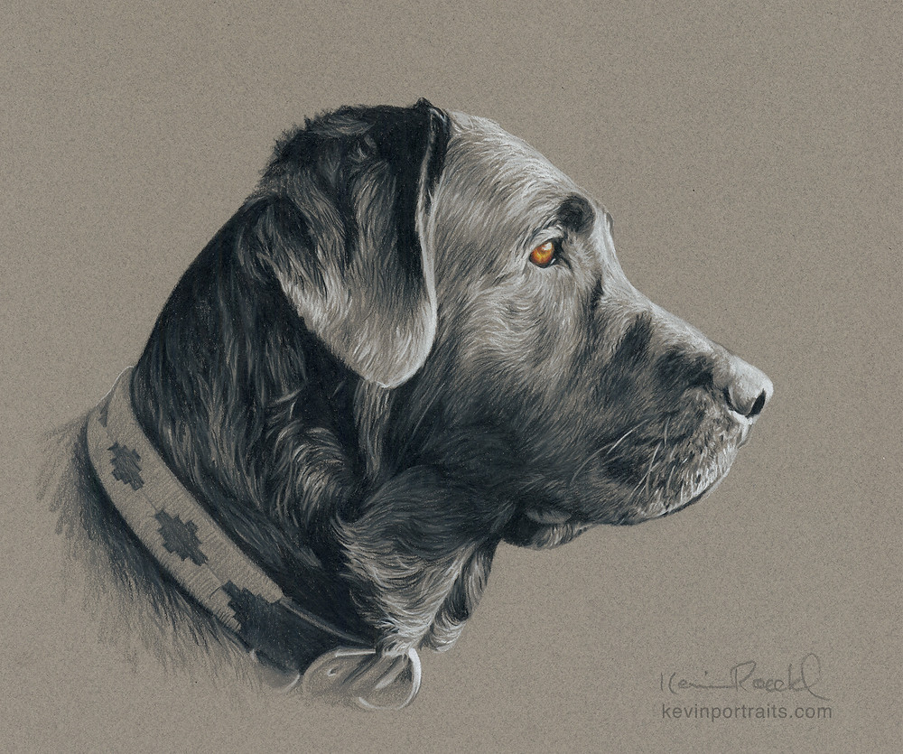 Grisaille colored pencil fine art portrait of black Labrador Retriever dog by artist Kevin Roeckl