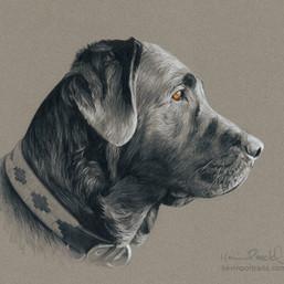 Luca portrait finished