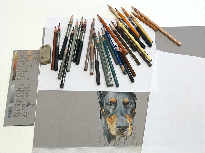 Colored pencil portrait of black Doberman with Prismacolor colored pencils