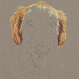 Carly portrait in progress 2