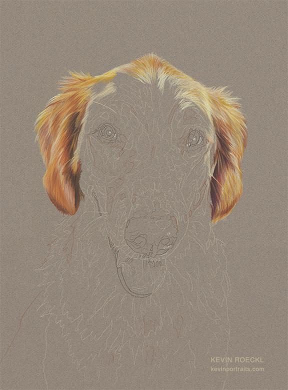 Fine art head study portrait of Golden Retriever dog in progress