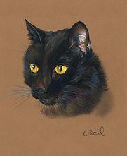 Fine art portrait drawing of cat, head study