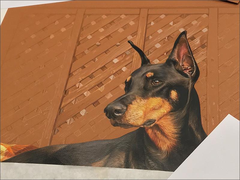Detail of a colored pencil portrait of a black Doberman in progress