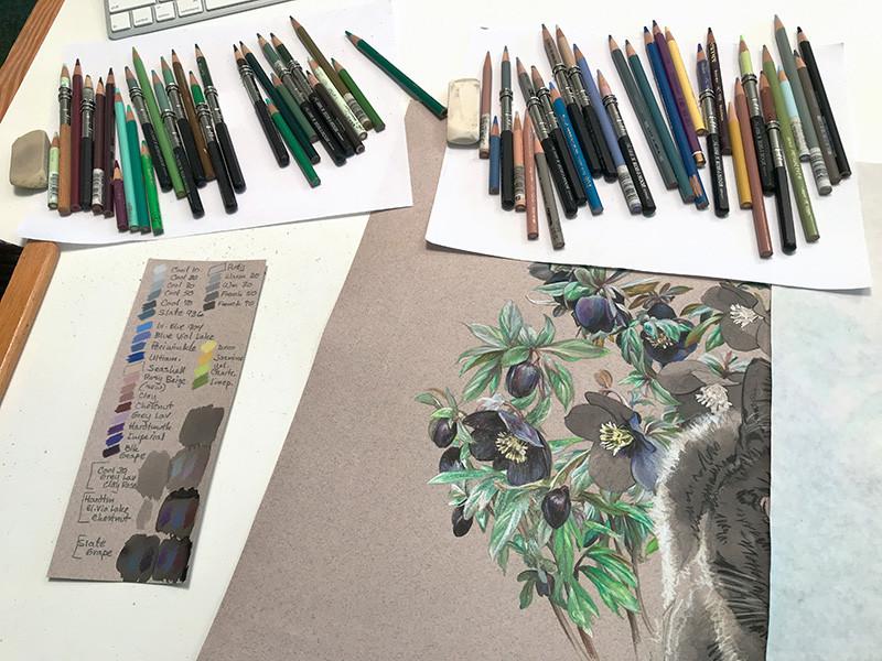 Portrait of black cat with hellebore flowers, in progress in the studio