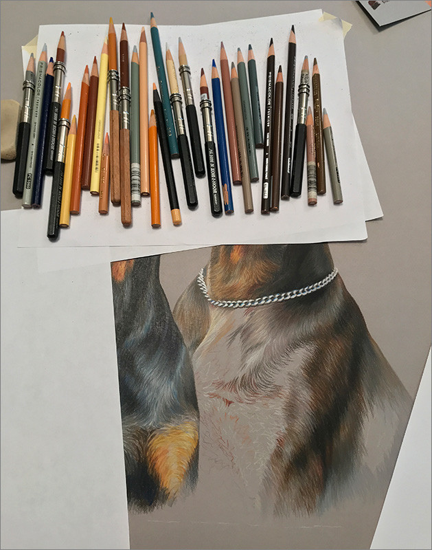 Close-up of colored pencil portrait of black Doberman and red Doberman in progress, with colored pencils