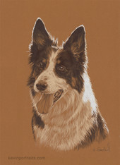 """Dot"" (Border Collie)"