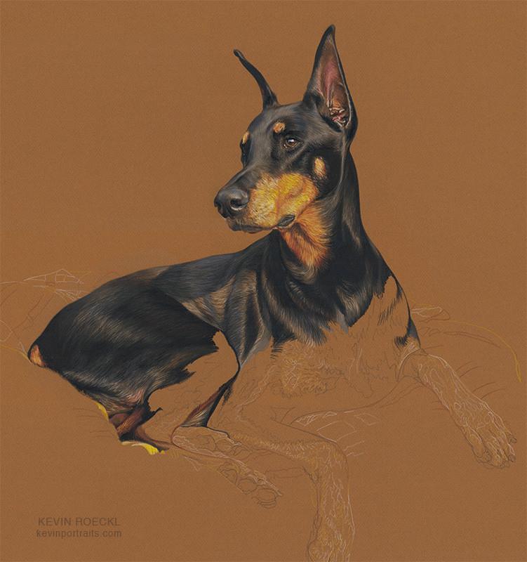Colored pencil portrait of a Doberman, in progress