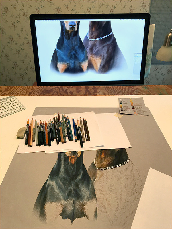 Colored pencil portrait of black Doberman and red Doberman in progress in Kevin's art studio, with reference photos and colored pencils