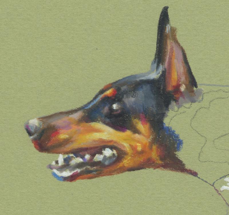 Detail of Doberman portrait, in progress