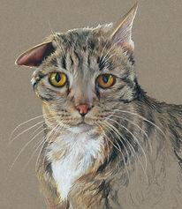 Fine art portrait of cat