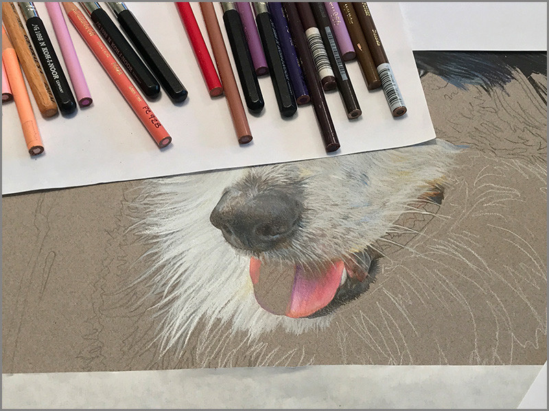 close-up of dog's tongue in colored pencil portrait, in progress