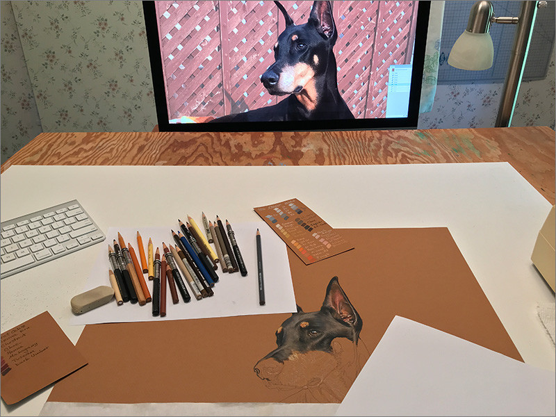 Colored pencil portrait of a black Doberman in progress, in Kevin's art studio with the reference photo on the monitor