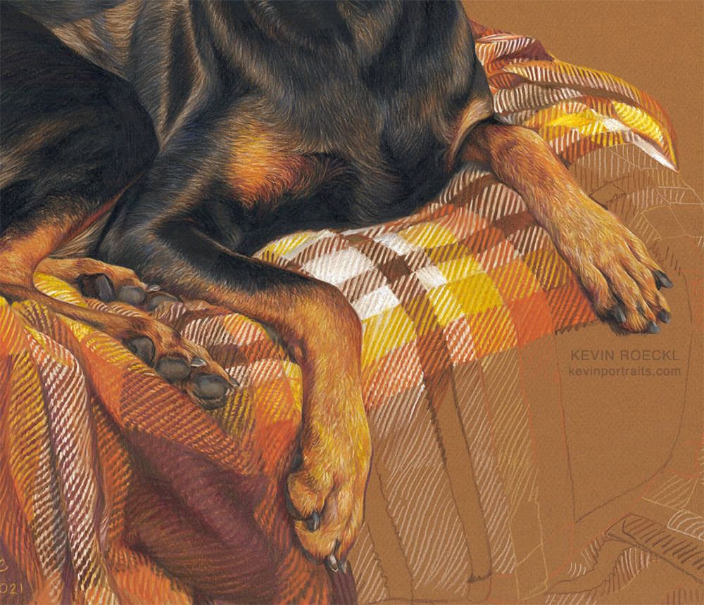 Detail of a colored pencil portrait of a black Doberman on a plaid blanket, in progress