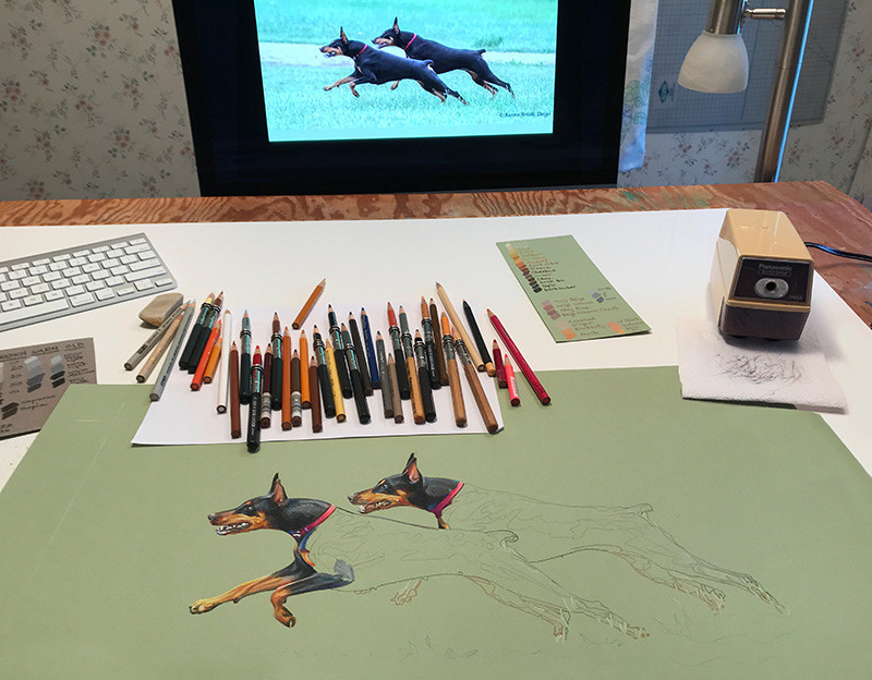 Colored pencil portrait of Dobermans running, with pencils, work table, and monitor, in Kevin's art studio